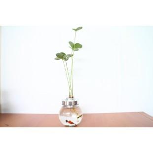 水生態闊葉鐵樹 特色小品