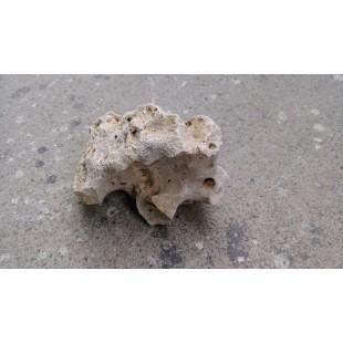 骷髏石 種子、球莖、造型裝飾與其他